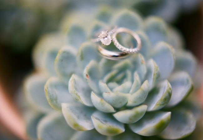oval-cut-engagement-ring-succulent-backdrop_full